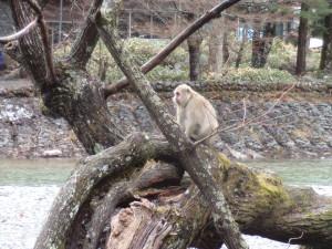 木のぼりしている猿
