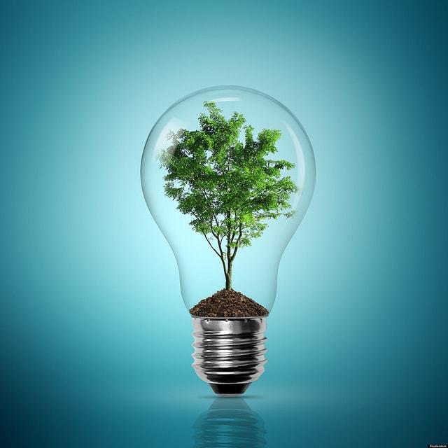 電球の中の木