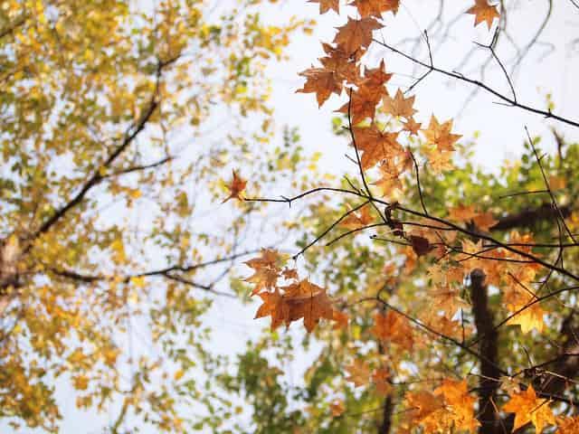 日本の風景 - 秋