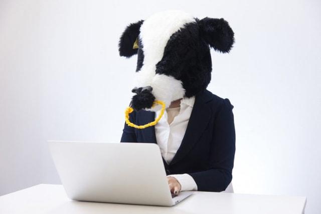 牛のかぶり物をしてパソコン操作する人