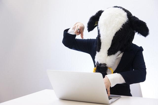 牛の被り物をしてパソコンを使う人