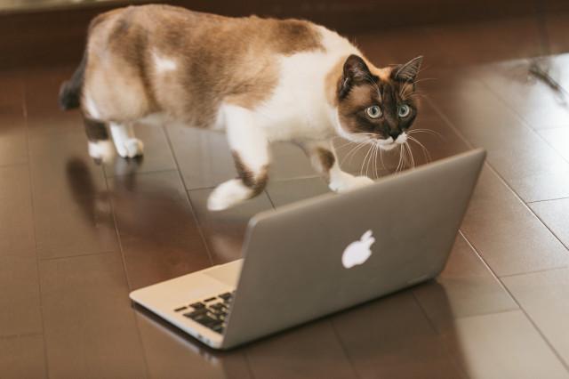 猫とノートパソコン(Mac)